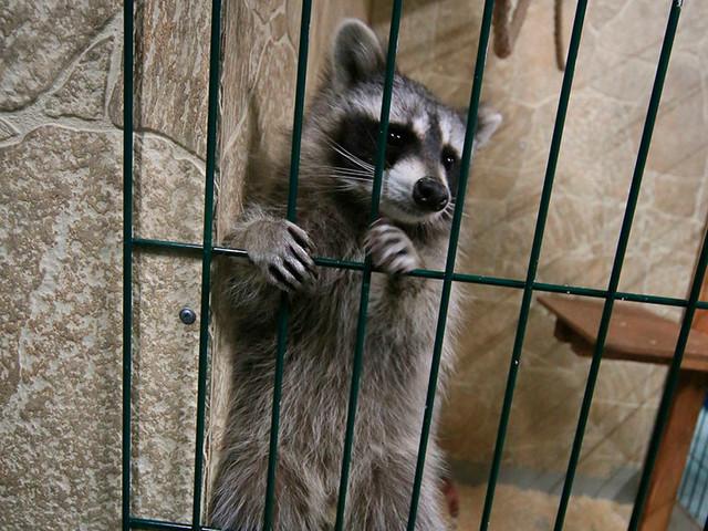 Дума готовится запретить контактные зоопарки