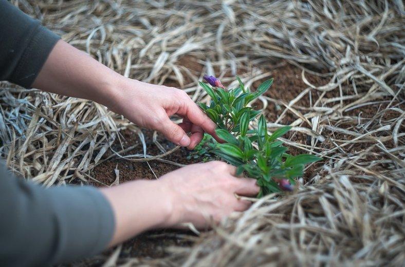 Рейтинг экологических проектов