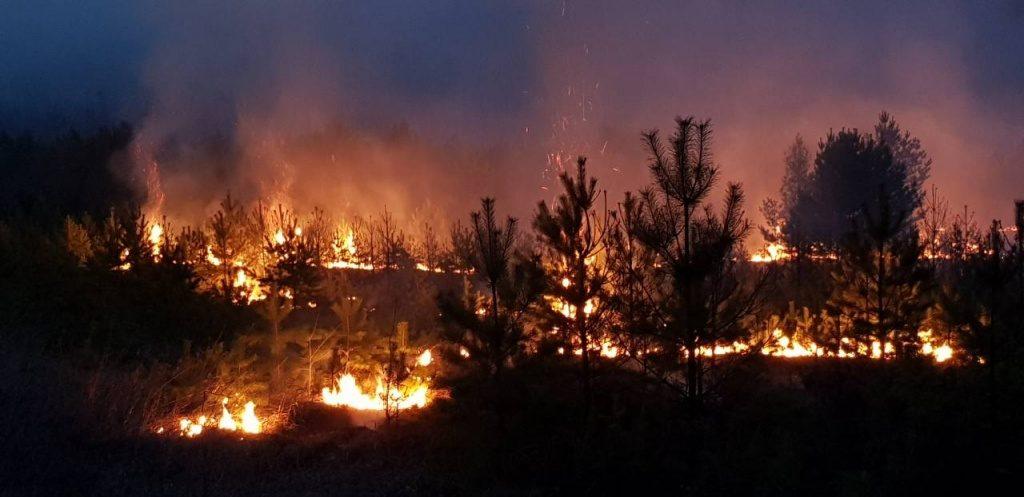 пожар лесной