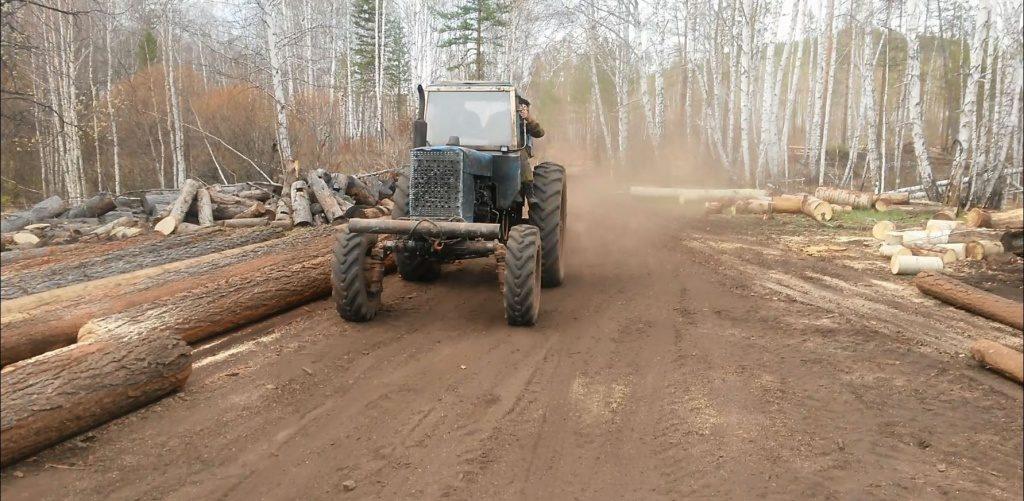нелегальные лесозаготовители