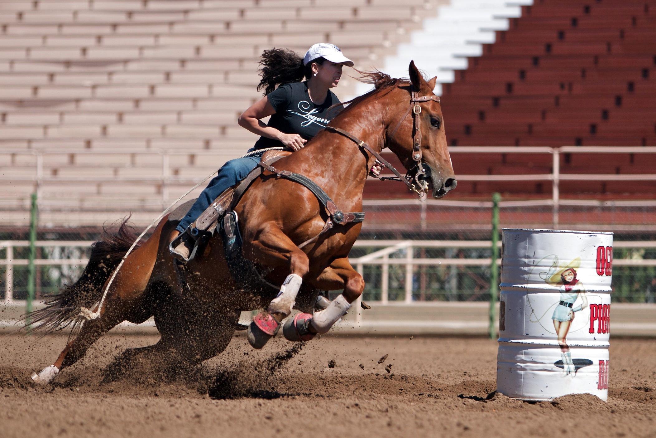 Конный спорт Спартакиада