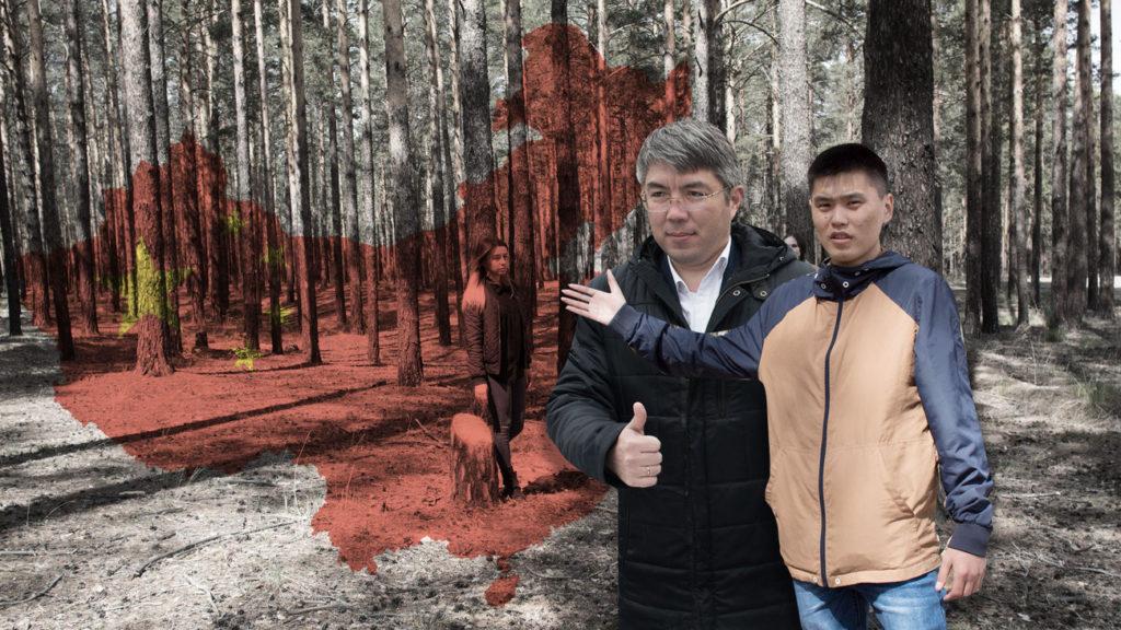 Деньги против леса
