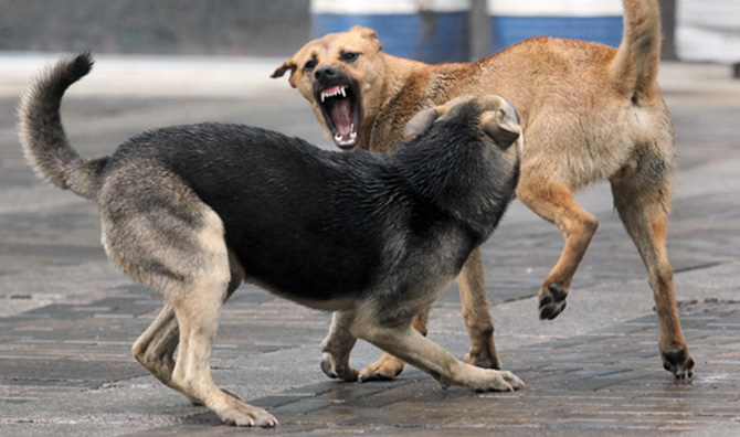 Собачьих стай
