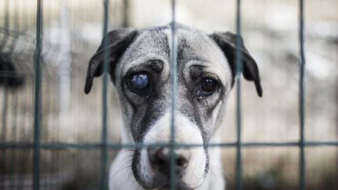 Собаке собачья смерть или тюрьма