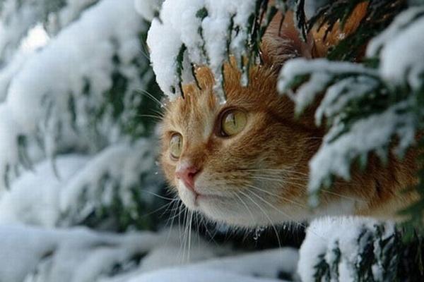 прогноз погоды Иркутск