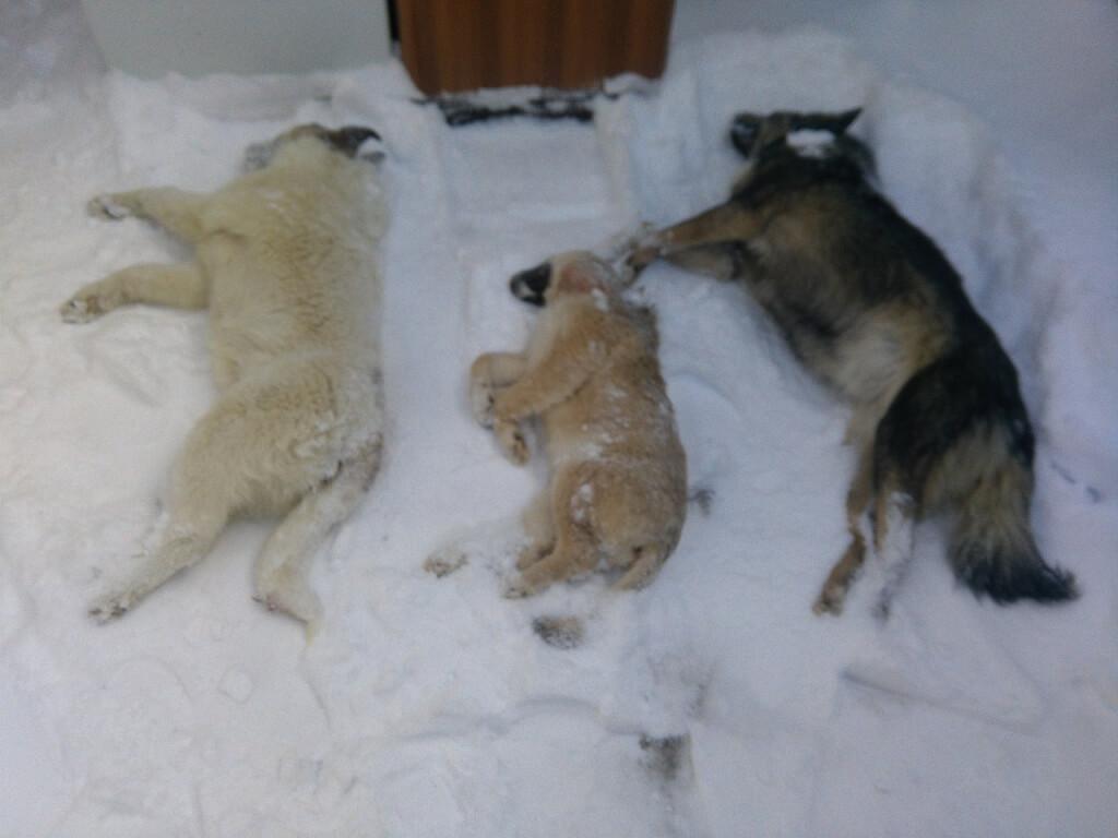 Бездомных собак массово отравили