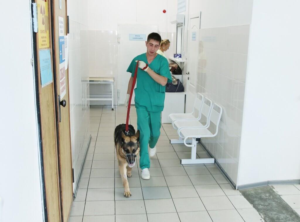 Служба ветеринарии Иркутской области организовала работу консультационной линии